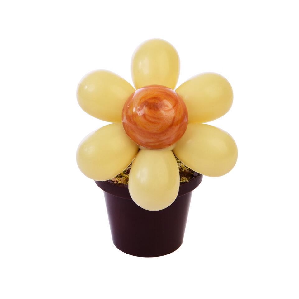 Fleur en chocolat Carré Noir